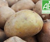 Mon Petit Producteur - Pomme De Terre Allians - Chair Ferme - Récolte juillet 2021