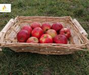 Au bon Jardinet - Pomme Jonagold X 1 Kg Un Régal !