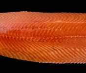 Fumaison Occitane - Filet de Saumon Fumé À Froid En Pavé (1 Kg, 10/12 Portions)