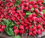 Le Châtaignier - Radis rouge et rose - 2 Bottes