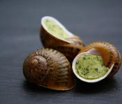 L'escargotière BONVALOT - 10 douzaines Escargots Frais en Coquille au Beurre d'Ail et de Persil