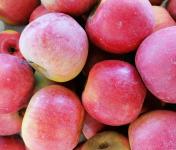 Le Châtaignier - Pommes Reines De Reinettes - Colis 14kg