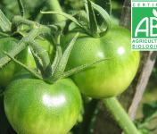 Mon Petit Producteur - Tomate Ronde Bio Paola Verte [vendu Par 3kg]
