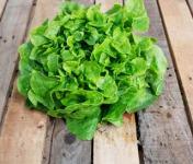 La Boite à Herbes - Feuille De Chêne Verte Bio