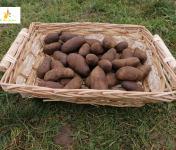 Au bon Jardinet - Pomme De Terre Bleu D Artois X 1kg