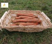 Au bon Jardinet - Carottes Un Goût Prononcé Et Délicieux 1kg