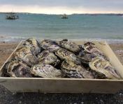 Les Huîtres Chaumard - Huîtres de Paimpol N°3 - bourriche de 50 pièces