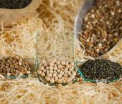 Du bio dans l'assiette - Lot Découverte Légumes Secs