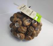 La Ferme Enchantée - 100 Escargots PETIT GRIS Vifs, Jeûnés Prêt à Cuisiner