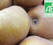 Mon Petit Producteur - Pomme Reinette Grise Du Canada Bio - 1kg