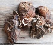 Camargue Coquillages - Violets De Roche - Pêche Responsable Et Durable