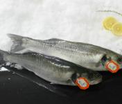 Pêcheries Les Brisants - Ulysse Marée - Bar De Ligne - Vidé Et Écaillé - 1 Pièce / 500g