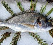 Camargue Coquillages - Daurade Royale Pêche Responsable Et Artisanale  - Environ 500g