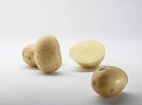 Maison Bayard - Pommes De Terre Noha