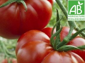 Mon Petit Producteur - Tomate Précoce Bio Marmande