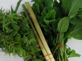 Les Herbes du Roussillon - Mixte Citronnelle Menthe Verveine