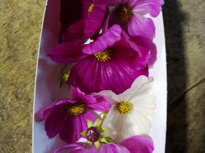 La Boite à Herbes - Fleur De Cosmos - Barquette 20g