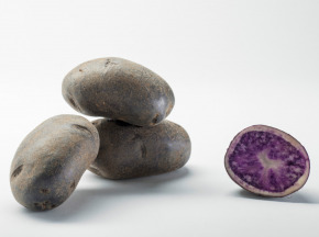 Maison Bayard - Pommes De Terre Blue Star