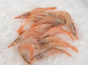 Côté Chic - Poisson frais de Méditerranée - Crevettes Rose De Mediterranée