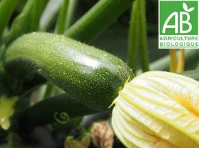 Mon Petit Producteur - Courgette Verte Bio [vendu Par 1 Kg]