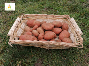 Au bon Jardinet - Pomme De Terre Rouge Franceline - 1kg