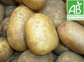 Mon Petit Producteur - Pomme De Terre Nicola - Variété À Chair Ferme