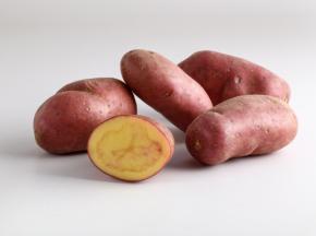 Maison Bayard - Pommes De Terre Roseval