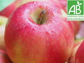Mon Petit Producteur - Pomme Idared