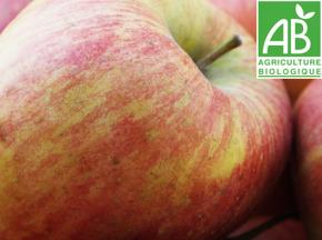 Mon Petit Producteur - Pomme Bicolore Gala