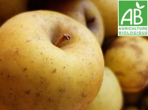 Mon Petit Producteur - Pomme Delice D'or