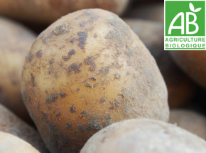 Mon Petit Producteur - Pomme De Terre Ditta - Variété À Chair Ferme