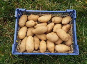 La Ferme Boréale - Pomme De Terre Spunta Calibre - De 35 - 3kg