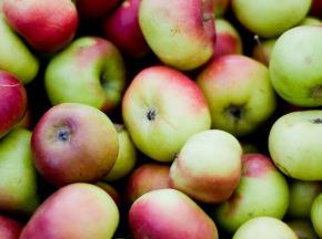 Valentin Grain - Fruits et légumes Conversion Bio - Mix Pommes - 3 Variétés Minimum - 1kg
