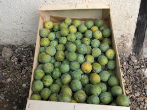Valentin Grain - Fruits et légumes Conversion Bio - Reine-claude - 1kg