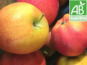 Mon Petit Producteur - Pomme Dalinette Bio - 3kg