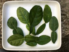 Le Jardin des Antipodes - Feuilles De Combava (kaffir Lime) Fraiches Bio