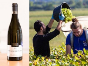 Oé - Coffret de 6 Chassagne-Montrachet AOC Bio, Bourgogne Chassagne-Montrachet du Domaine Morey-Coffinet, 2017