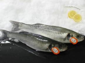 Pêcheries Les Brisants - Bar de ligne vidé et écaillé - 1 pièce pour 500g