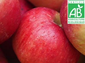 Mon Petit Producteur - Pomme Pink Kiss Bio - 1kg