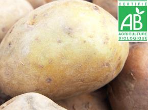 Mon Petit Producteur - Pomme De Terre Agria - Variété À Chair Tendre