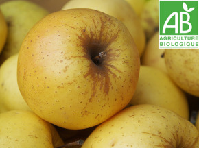 Mon Petit Producteur - Pomme Golden Bio - 3 Kg