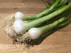 Au bon Jardinet - Botte d'oignons blancs frais nouveaux