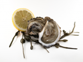 KONKAVEN - Huîtres Creuses De Cancale Prestige N°4 - 3kg