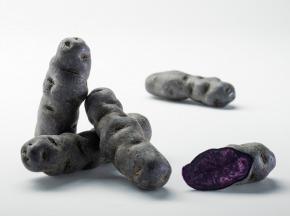 Maison Bayard - Pommes De Terre Vitelotte Bleue Du Santerre - 5kg