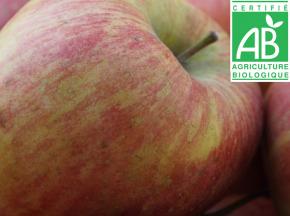 Mon Petit Producteur - Pomme Topaze Bio - 1kg