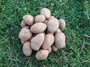 La Ferme Boréale - Pomme De Terre Spunta Calibre 35-55 - 3kg