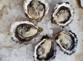 Camargue Coquillages - La Perle De Camargue huîtres creuses BIO 2 douzaines