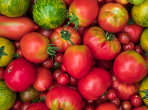 Maison Argentain - Tomate Pleine Terre Ancienne  - 1kg