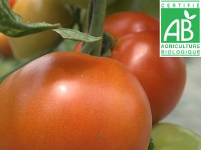 Mon Petit Producteur - Tomate Ronde Bio Paola [vendu Par 3kg]