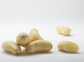 Maison Bayard - Pommes De Terre Celtiane